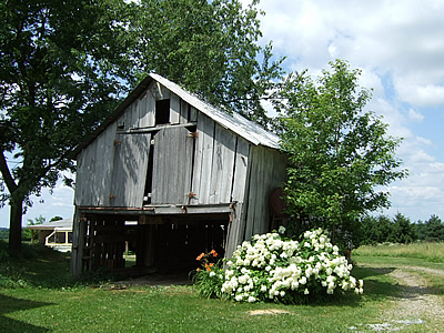 Barn Orchard at Pioneer Farm, Apple Creek, OH