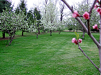 Orchard at Pioneer Farm, Apple Creek, OH
